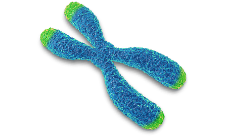 a research on the different types of rna in the human cells Chapter 2 the different types of stem cells somatic cells are all the cell types of the human body apart 13 and 214 types of stem cells 213 as a research.